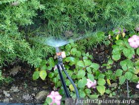 l'arrosage automatique permet d'économiser l'eau et son temps en été